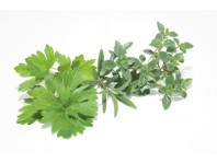 Herbes et aromates bio